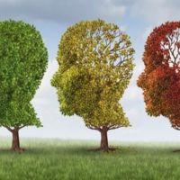 """Nuevo estudio relaciona la """"dieta occidental"""" con el Alzheimer"""