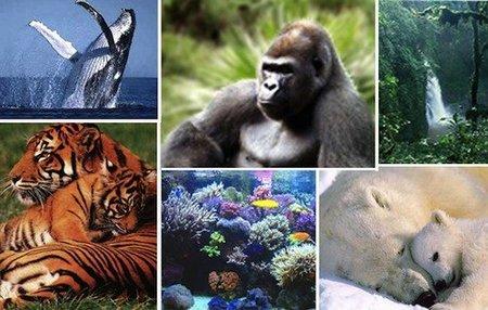 Día Internacional de la Tierra: los niños cuidarán nuestro planeta