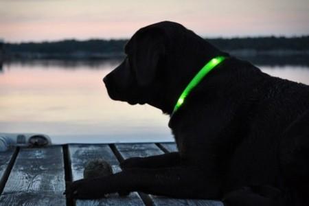 Glowdoggie, collar fluorescente para perros