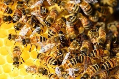 Las abejas como indicadores de la contaminación en el aeropuerto de Hamburgo