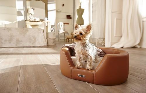 La frase vida de perros cambia su significado cuando conoces los accesorios de Cyriano