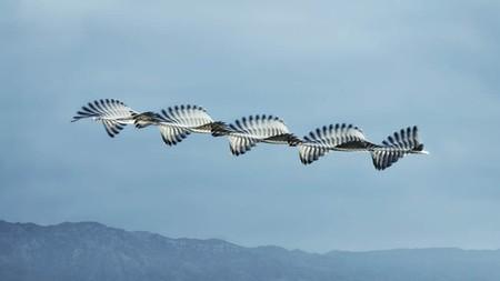 Ornitography Xavi Bou 2