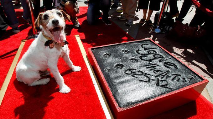 Fotos de Uggie, el perro de 'The Artist'