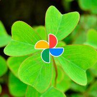 Botón oculto de Google Fotos para búsqueda aleatoria: cómo usar el 'Voy a tener suerte'