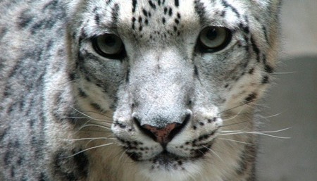 """Código """"Marble"""", la posible nueva interfaz de Snow Leopard"""