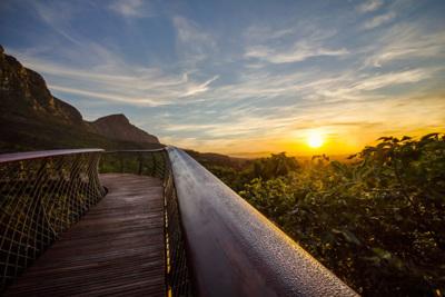 Una pasarela a 12 metros del suelo para disfrutar de Kirstenbosch a vista de pájaro
