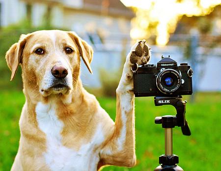 Como Fotografiar Mascotas I Perros 3