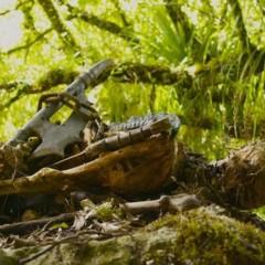 Foto 3 de 4 de la galería el-hobbit-nuevas-imagenes-en-el-set-de-rodaje en Espinof