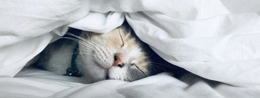 La siesta en verano: estos son los beneficios sobre la salud de uno de los mayores placeres