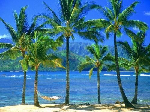 Foto de Hawaii (8/9)