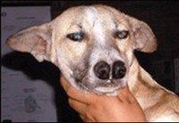Perros con un par de narices