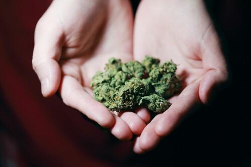 Senado aprobó legalizar el consumo de marihuana en México: lo que hay que saber de la nueva regulación del consumo lúdico de cannabis