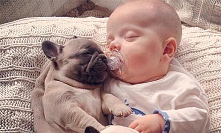 Bebé y bulldogs 4