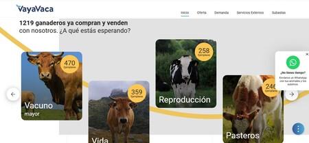 """El """"eBay de las vacas"""" en España: cómo Vaya Vaca reinventa las subastas y la compra y venta de ganado"""