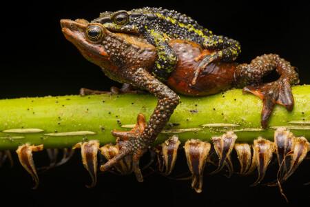 R Jaime Culebras Wildlife Photographer Of The Year 2020