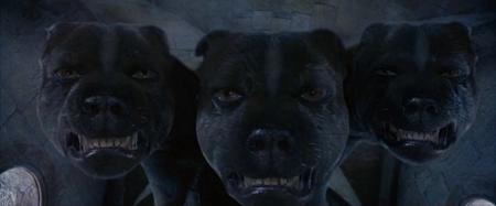 Harry Potter Perro
