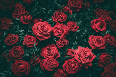 Los colores importan, al menos si hablamos de estudiar plantas: un estudio revela que las más llamativas se investigan más