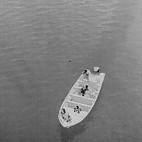 Un grupo de pescadores disparó y derribó un dron de organización que cuida de las vaquitas marinas en el Golfo de California