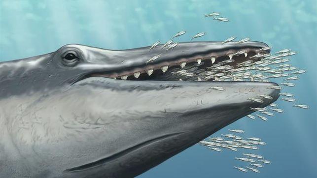 Ya sabemos cómo las ballenas dejaron de tener dientes gracias a este fósil