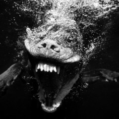 Foto 7 de 7 de la galería sorprendentes-fotografias-caninas-bajo-el-agua en Xataka Foto