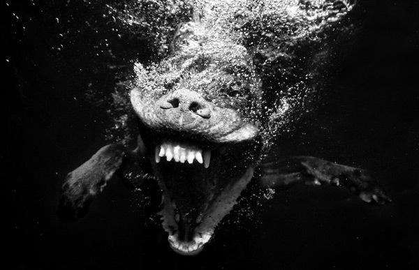 Foto de Sorprendentes fotografías caninas bajo el agua (7/7)