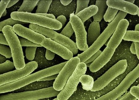 Koli Bacteria 123081 960 720