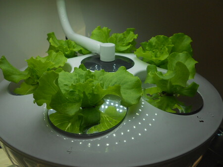 Salad Aerofarm