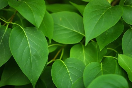 lecho de hojas para capturar al bebe
