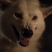 Fantasma es el protagonista del nuevo teaser de 'Juego de Tronos'