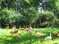 Los zoológicos de París