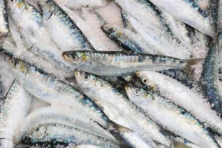 Desde hoy llegan las sardinas a las pescaderías: comienza la campaña con más capturas, pues se está recuperando la especie