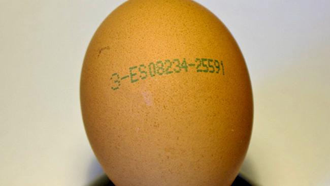 Identificación del huevo