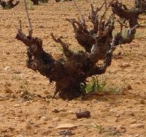 El mundo del vino cambia con el cambio climático