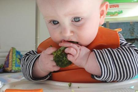 Bebés comiendo comida sólida