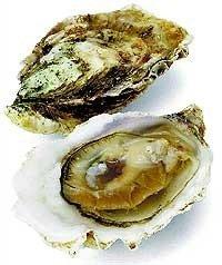 Ostras, un delicioso producto del mar