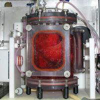 Primer trasplante exitosos de un pulmón creado en laboratorio (en cerdos)