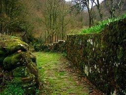 Slieve Bloom: Un bosque de hadas en Irlanda