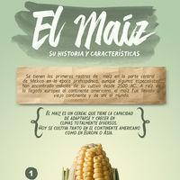 El maíz, su historia y características.Infografia