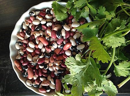El frijol y sus variedades: junto al maíz son base de la cocina mexicana