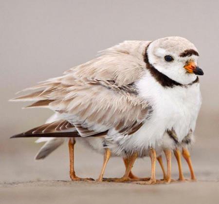 El pájaro con ocho patas