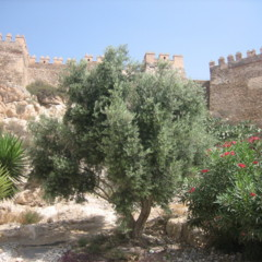 Foto 1 de 16 de la galería alcazaba-de-almeria en Diario del Viajero