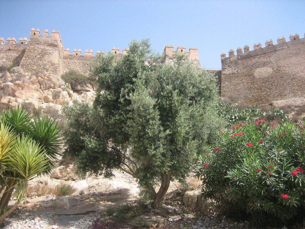 Foto de Alcazaba de Almería (1/16)