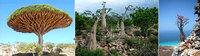 Lugares increíbles: Socotra