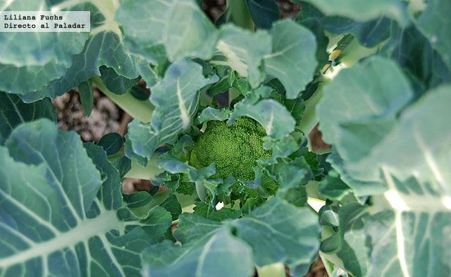 Brócoli joven