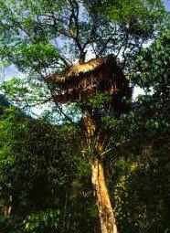 Alojarse en la copa de un árbol