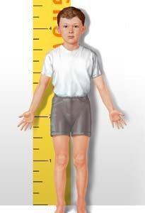 La expresión génica de la estatura