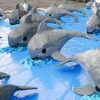 Nuevo cuerpo sin vida de vaquita marina en México, podrían quedar menos de 22
