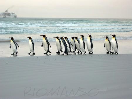 Se crea la mayor área protegida marina del mundo en aguas antárticas