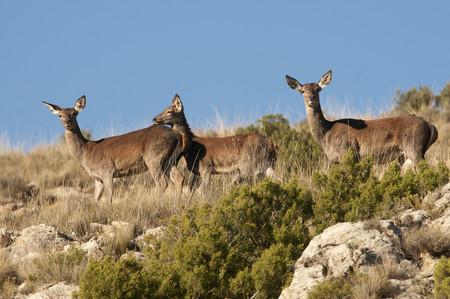 No diga caza, diga carne silvestre: Europa promueve las bondades de un alimento ignorado en España