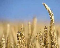 Producción mundial de cereales, nuevo récord
